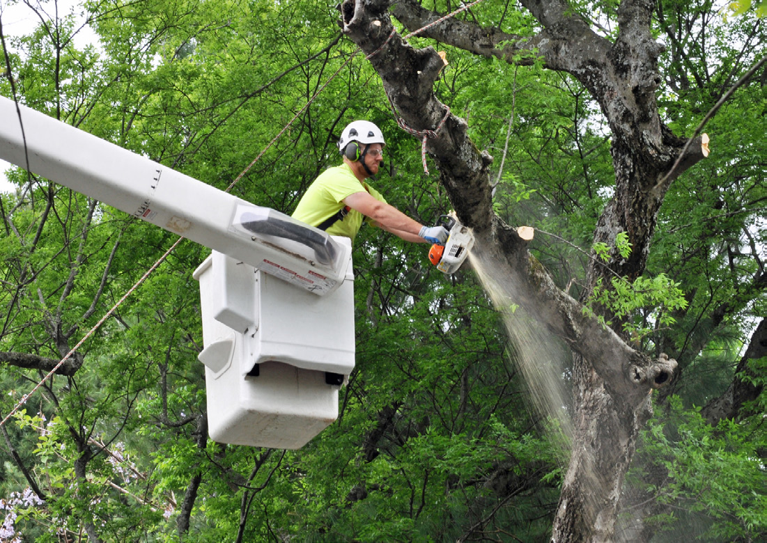 Bucket Truck Aerial Lift Operator - OH&S Safety Consulting